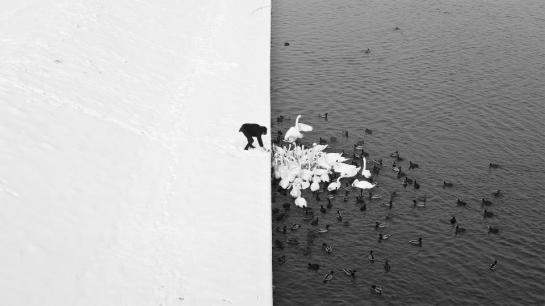 marcin-ryczek-un-homme-alimentent-des-cygnes-dans-la-neige
